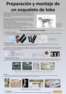panel montaje esqueleto lobo