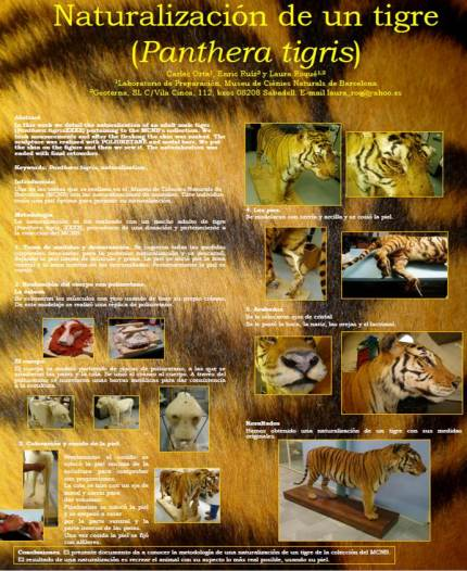 naturalizacion tigre