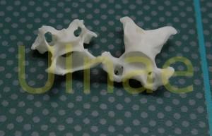 vertebra ave