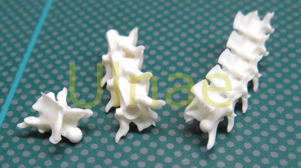 vertebra reptil