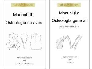 manuales osteologia ulnae bones