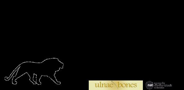 preparacion mamiferos Ullnae Bones
