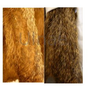 ulnae bones Macba restauracion taxidermia