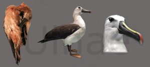 Ulnae Bones naturalizacion aves limpieza pieles