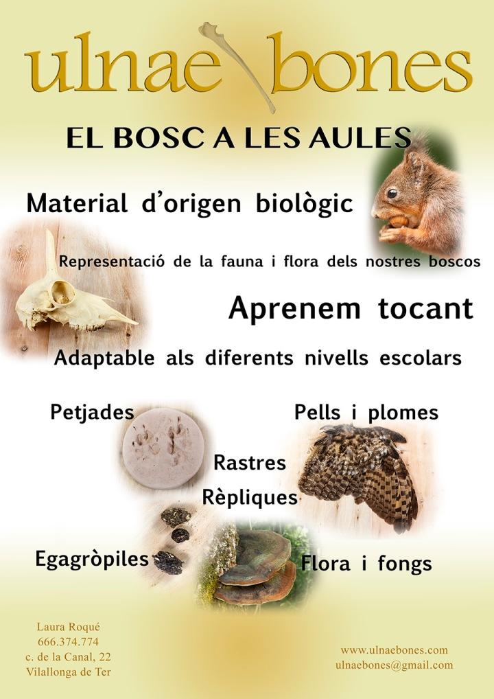 el bosc a les aules ulnae bones