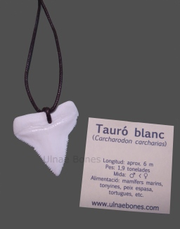 collar tiburon blanco replica