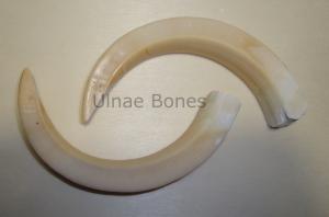 colmillo jabali replica ulnae bones