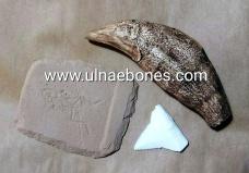 ejip 2018 ulnae bones replicas oso de las cavernas