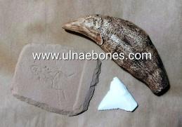 ejip 2018 ulnae bones replicas