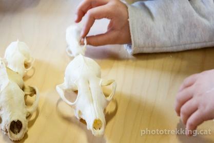 tallers ulnae bones