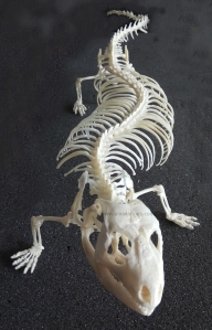 ulnaebones esqueleto montado reptil cosmocaixa