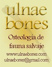 Logo UlnaeBones_vertical