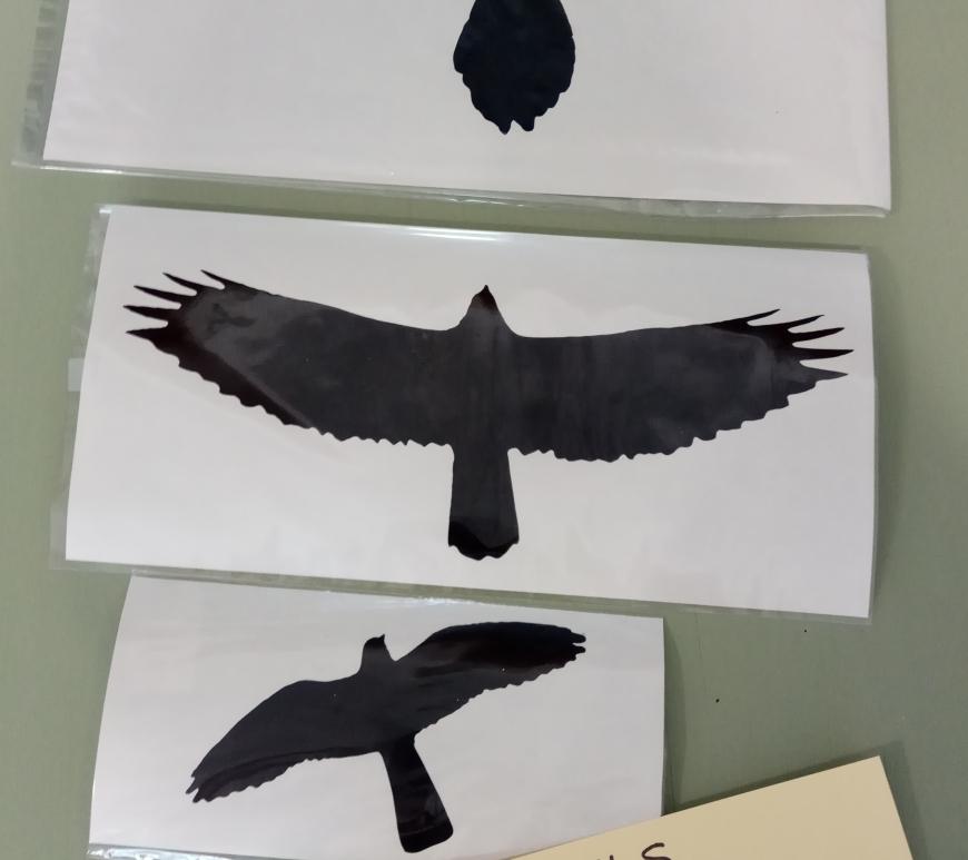 vinilo ulnae bones phototrekking aves
