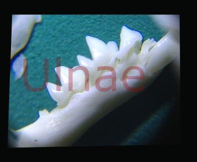lupa4_1