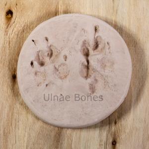 footprint huella lobo llop canis lupus ulnaebones