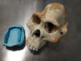 australopithecus ulanebones osteologia