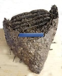ulnaebones nido avispa asiatica