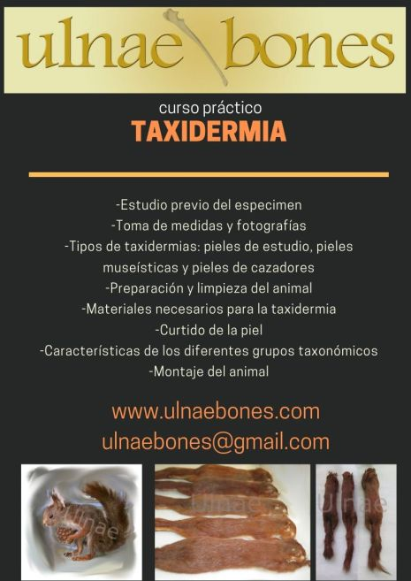 curso taxidermia ulnaebones presencial