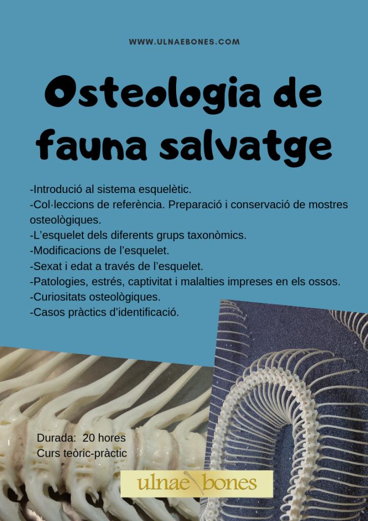 osteologia fauna salvatge ulnaebones taller