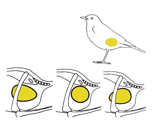 giro del huevo ulanebones