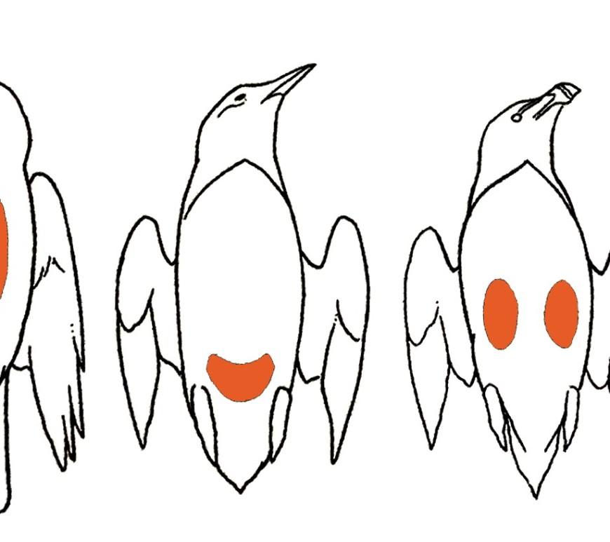 placa incubatriz ulnaebones aves